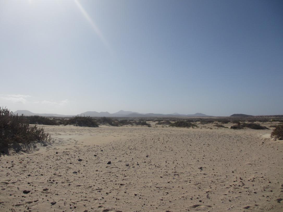 Fuerteventura sand dune landscape