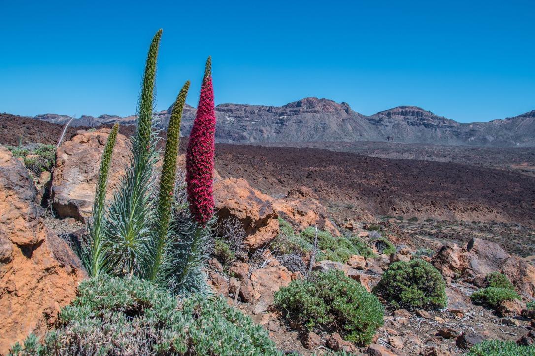 Spain misconceptions - Tenerife
